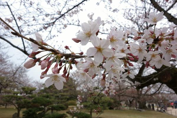 0410姫路城3.JPG
