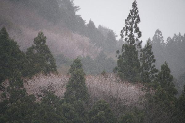 0413吹雪.JPG